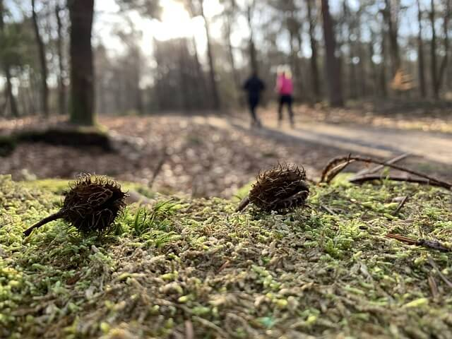 Im Wald wandern.